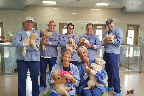 SoutheasternGuide Dogs